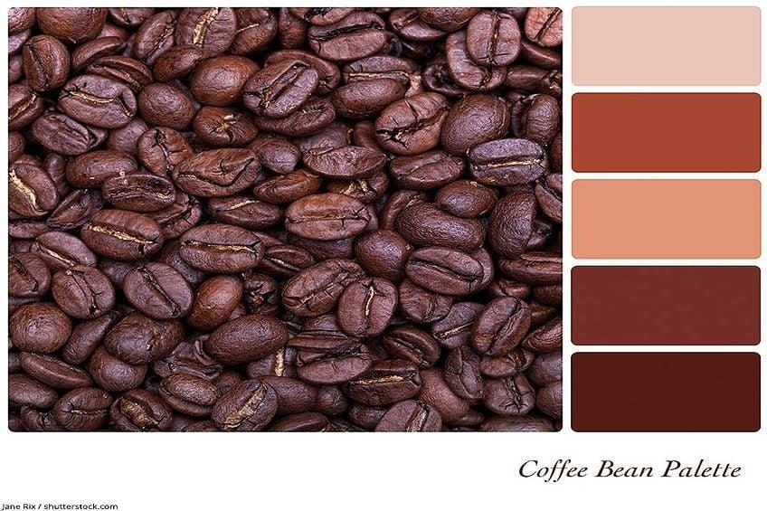 Brown Color Palette Coffee Bean