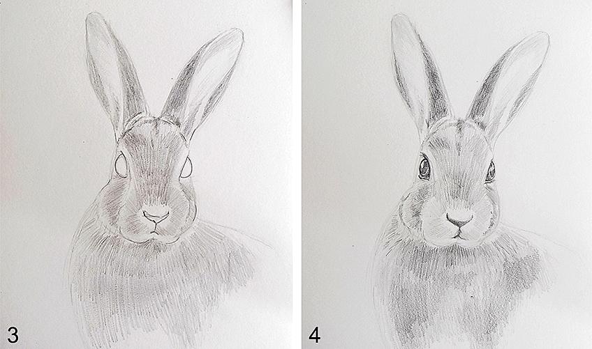 Bunny Drawing Step 2