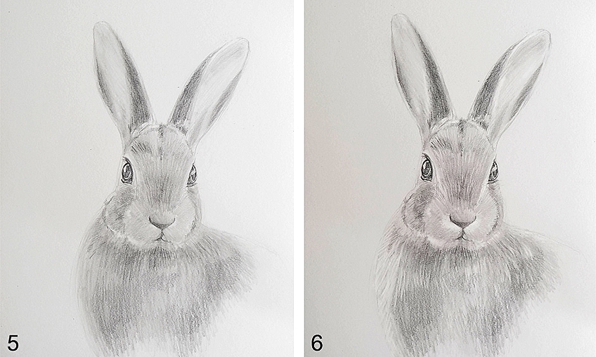 Rabbit Drawing Step 3