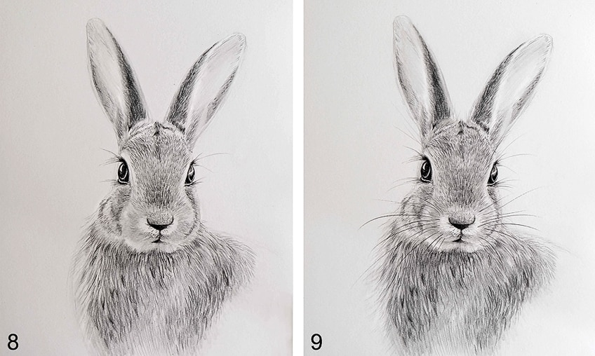 Simple Bunny Drawing Step 5