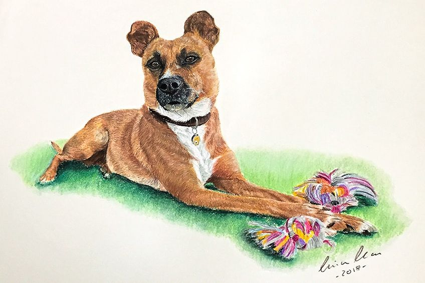 Easy Dog Drawing
