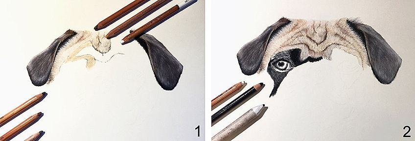 How to Draw a Dog Step by Step 1