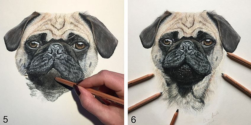 How to Draw a Dog Step by Step 3