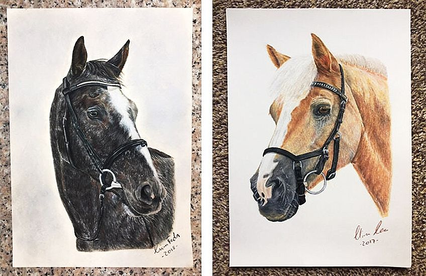 Different Drawing of a Horse Head
