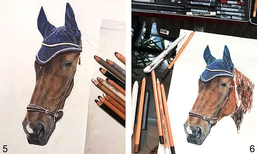 Drawing of a Horse Head