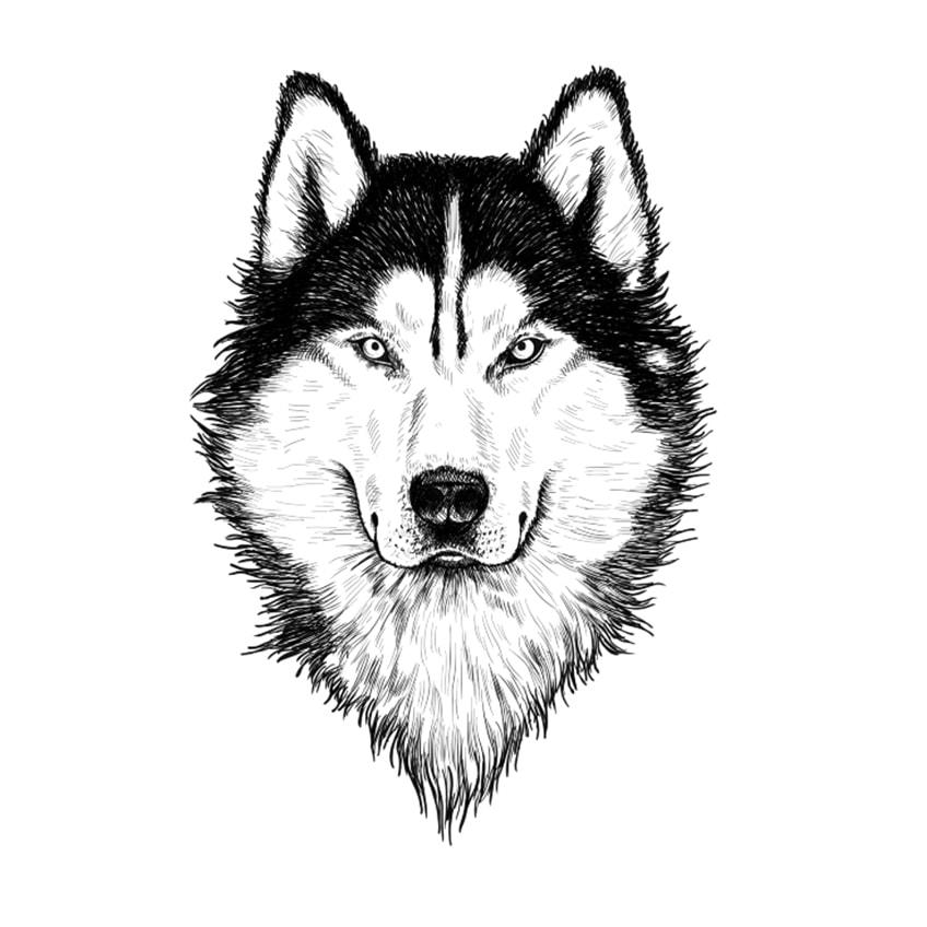 Final Wolf Sketch