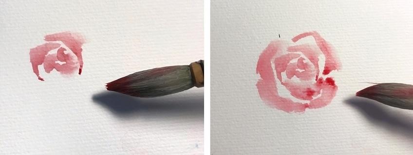 Rose Drawings
