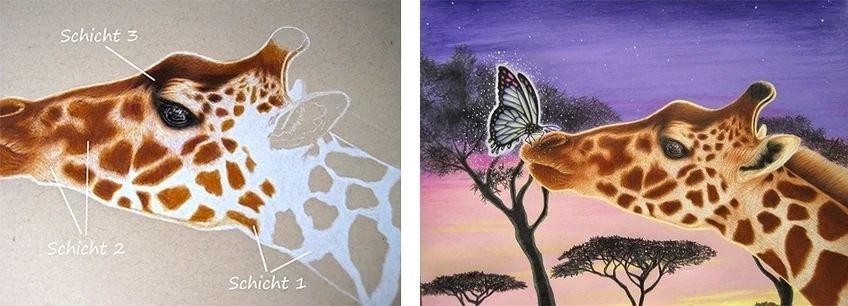 Step-by-Step Animal Drawings
