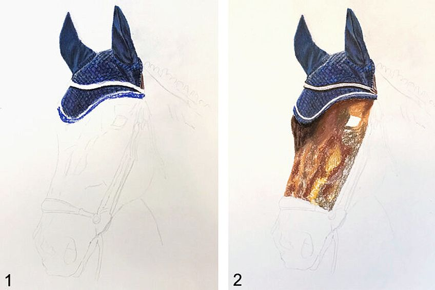 Step to Draw a Horse Head