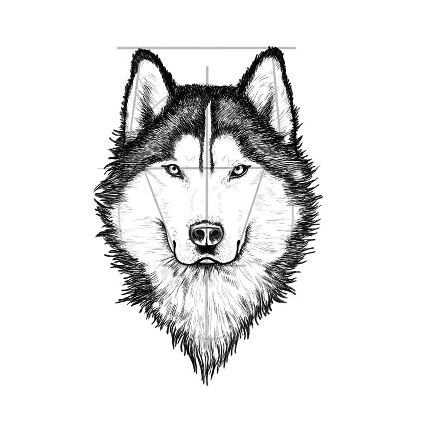 Wolf Sketch Step 10A