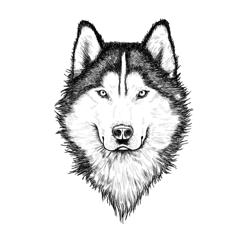 Wolf Sketch Step 10B