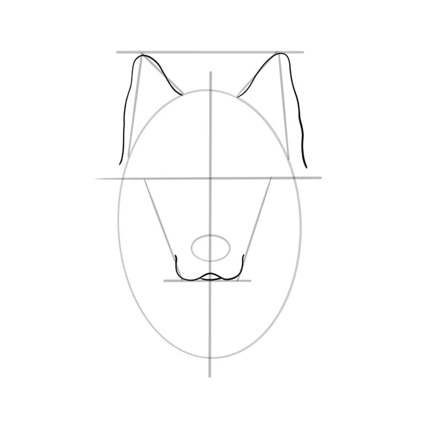 Wolf Sketch Step 6