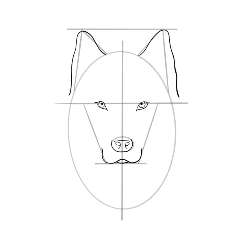Wolf Sketch Step 7
