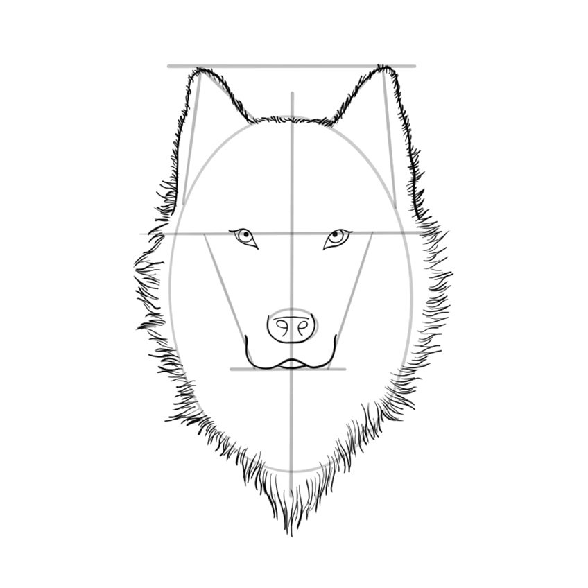 Wolf Sketch Step 8A