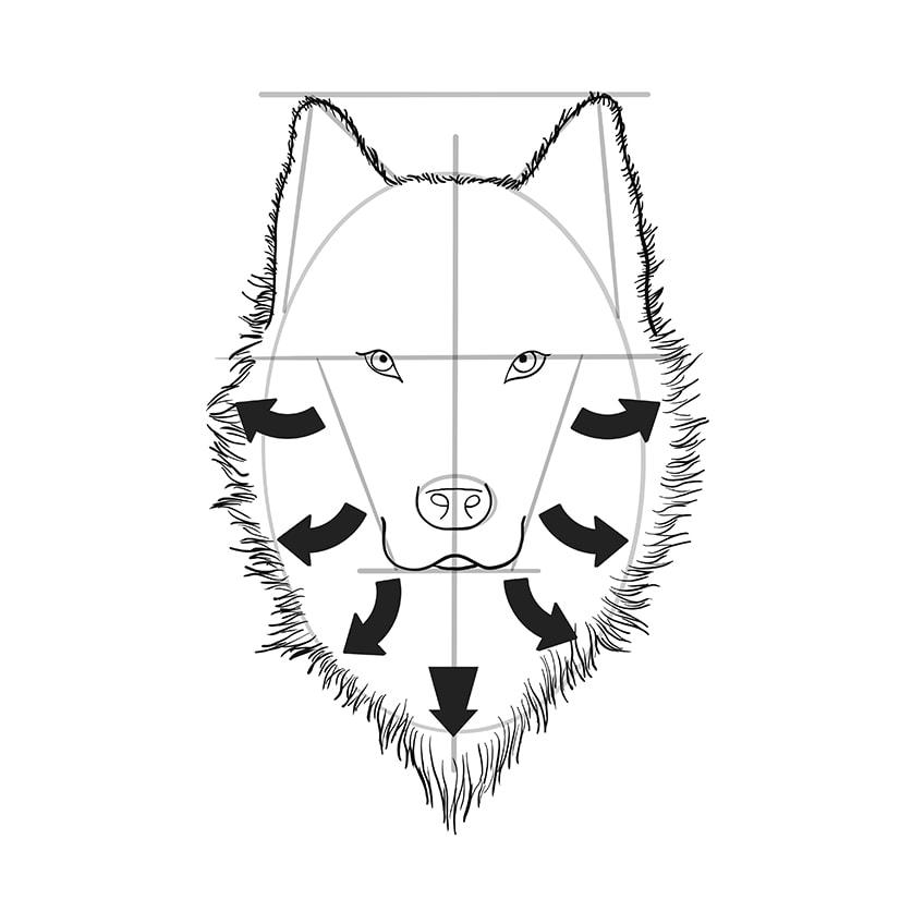 Wolf Sketch Step 8B