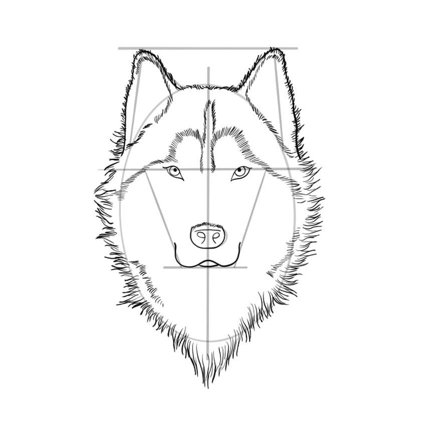 Wolf Sketch Step 9