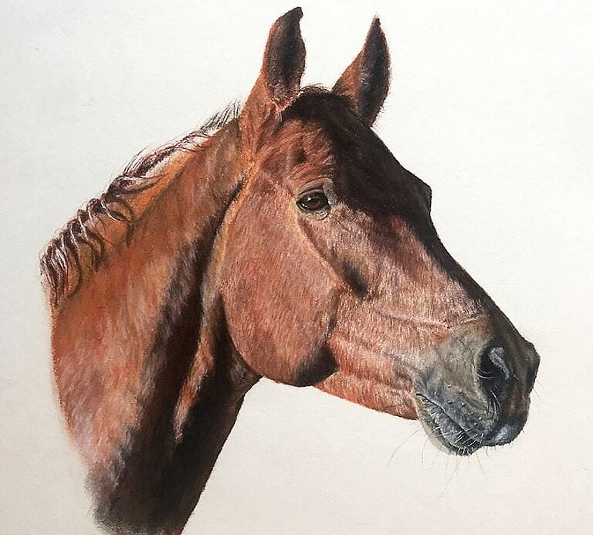 how to draw a horse head-step by step