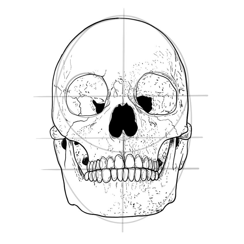 Skull Sketch 10