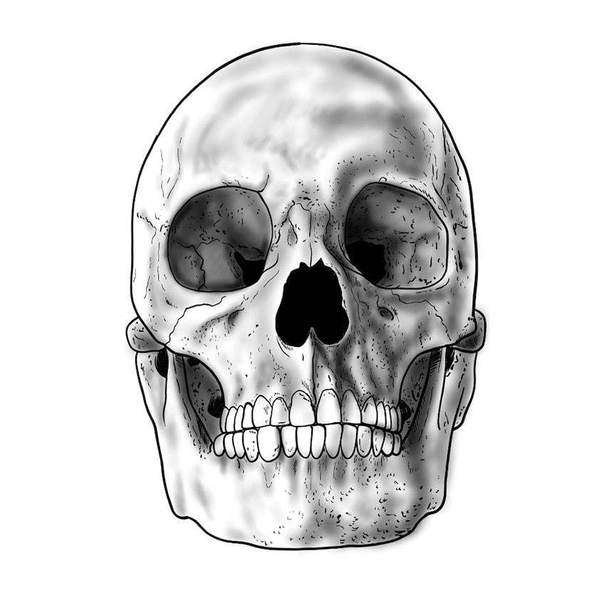 Skull Sketch 11