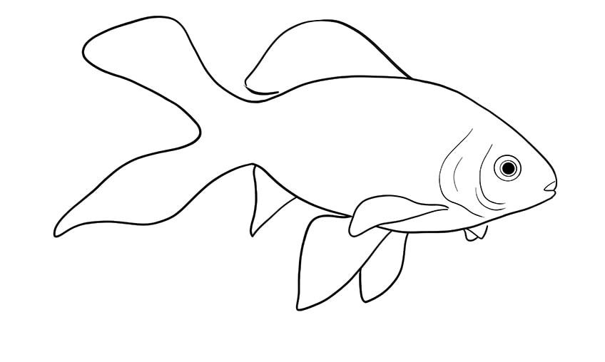 goldfish drawing 10