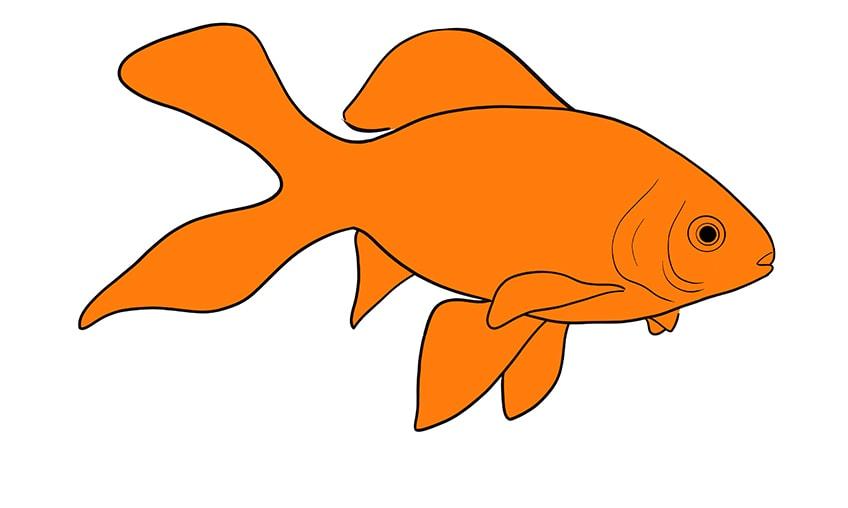 goldfish drawing 11