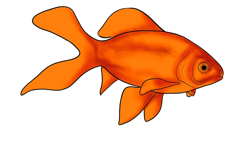 goldfish drawing 12