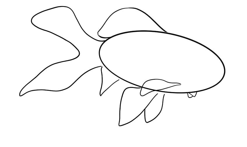 goldfish drawing 7