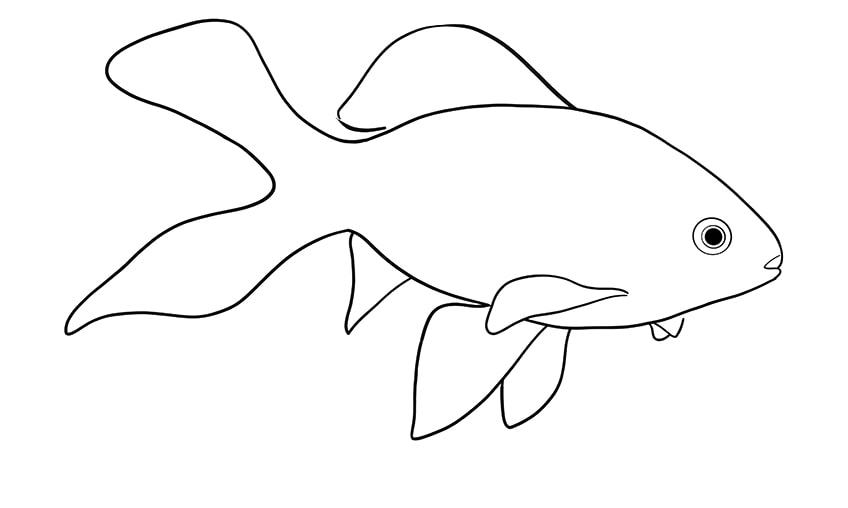 goldfish drawing 9