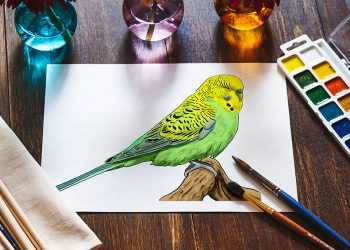 how to draw a budgie 2
