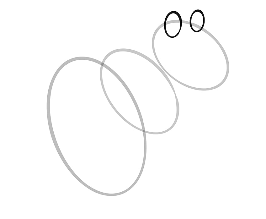 How to Draw a Squirrel Step 04