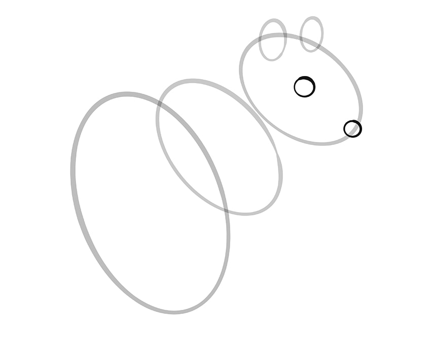 How to Draw a Squirrel Step 05