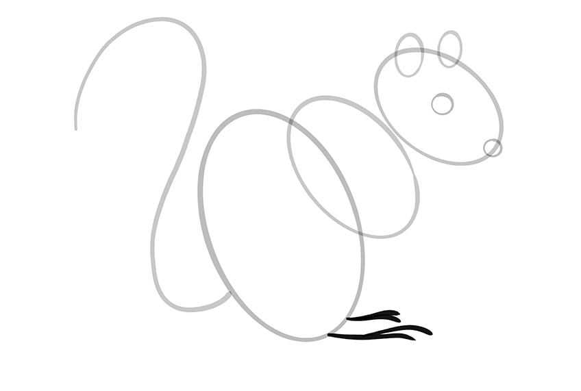 How to Draw a Squirrel Step 07