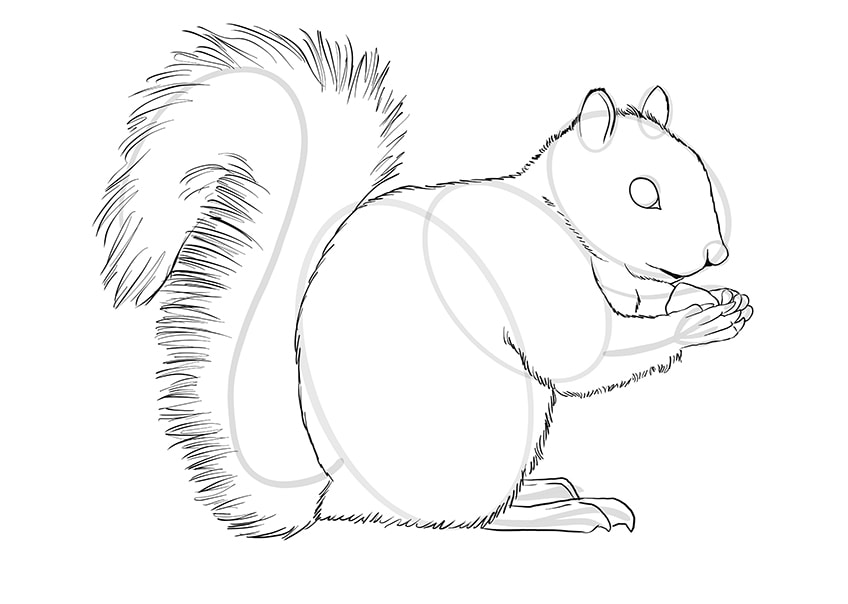 How to Draw a Squirrel Step 09