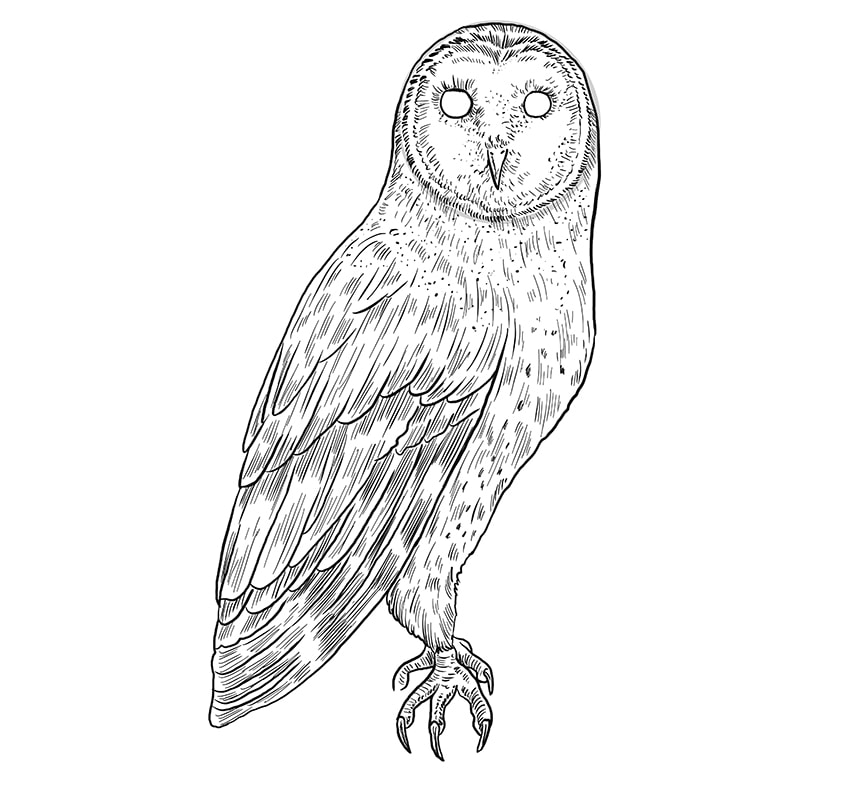 Step 09a of Owl Drawing