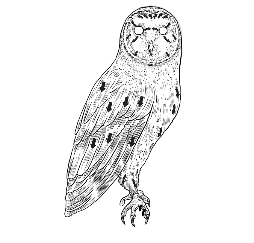 Step 09b of Owl Drawing