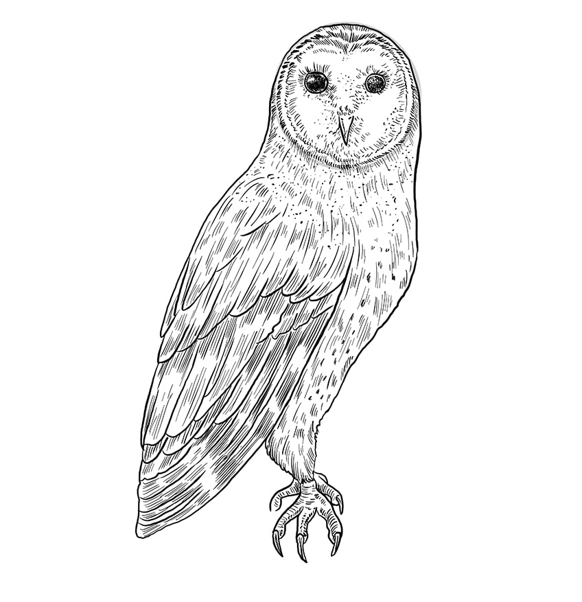 Step 10 of Owl Drawing