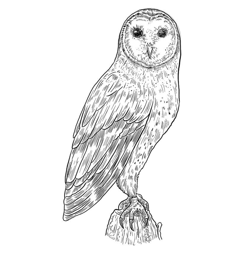 Step 11 of Owl Drawing