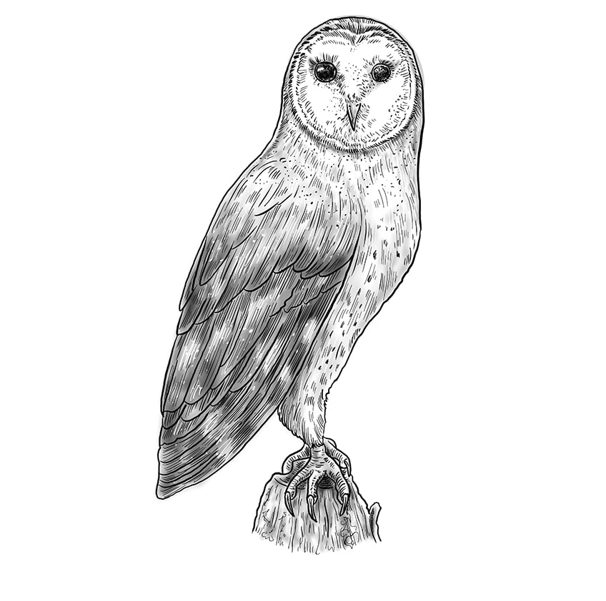 Step 12 of Owl Drawing