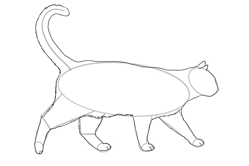 cat drawing 11