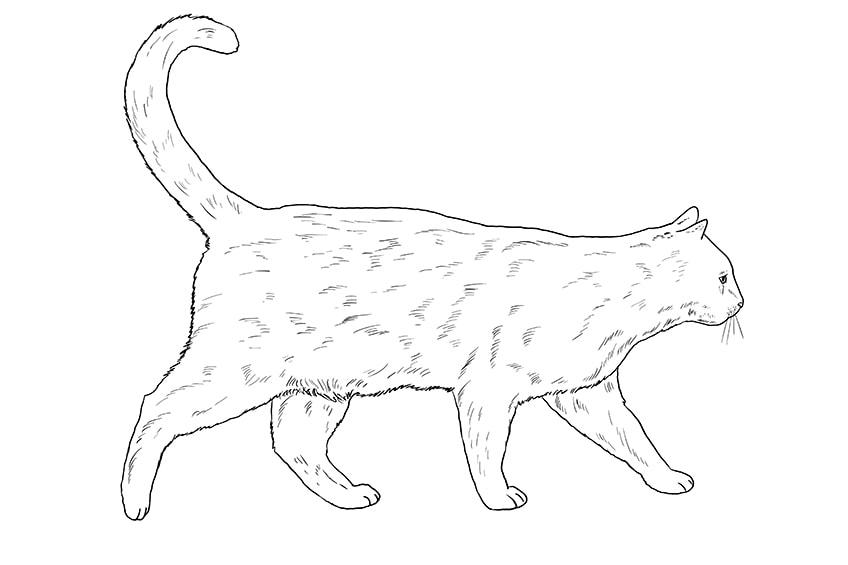cat drawing 12