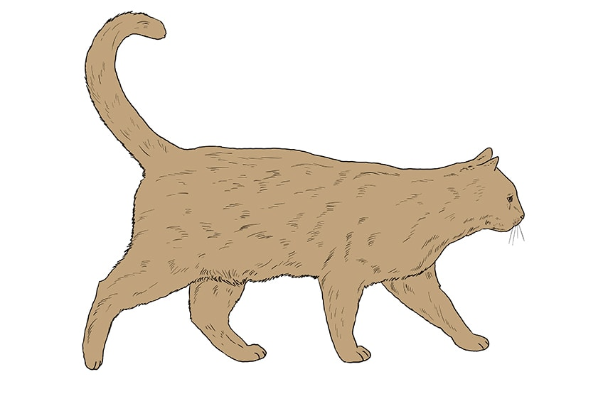 cat drawing 13