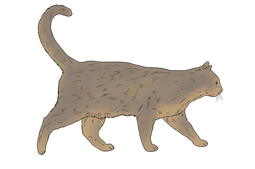 cat drawing 14
