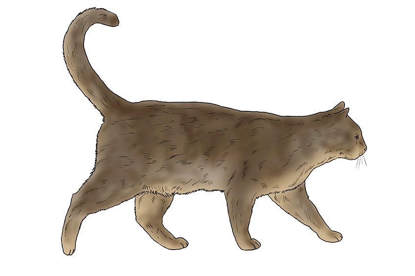 cat drawing 15