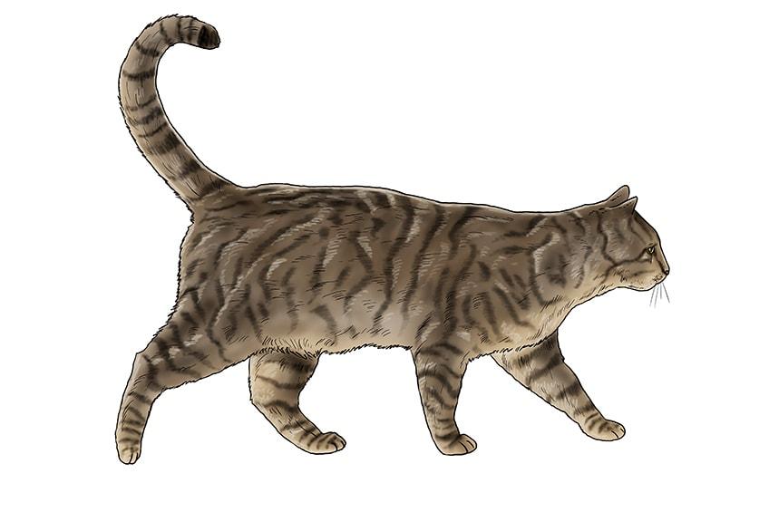 cat drawing 18