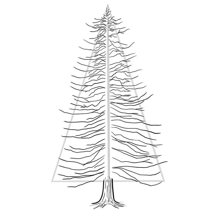 conifer drawing 6