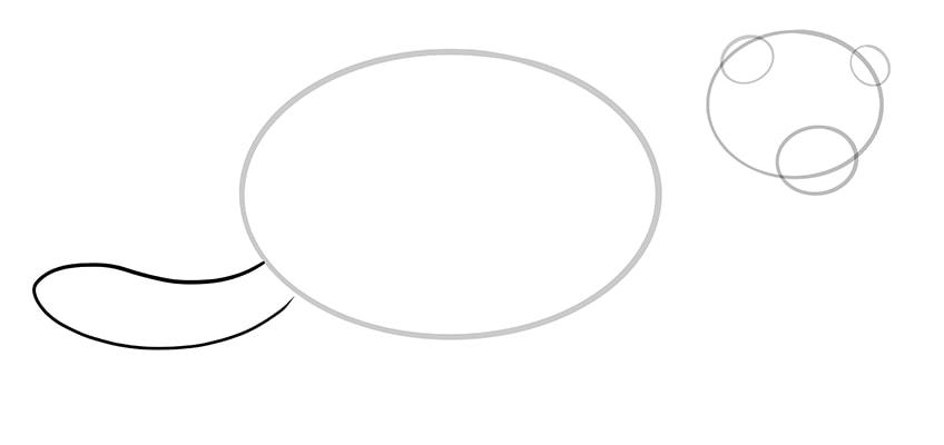 ferret drawing 5