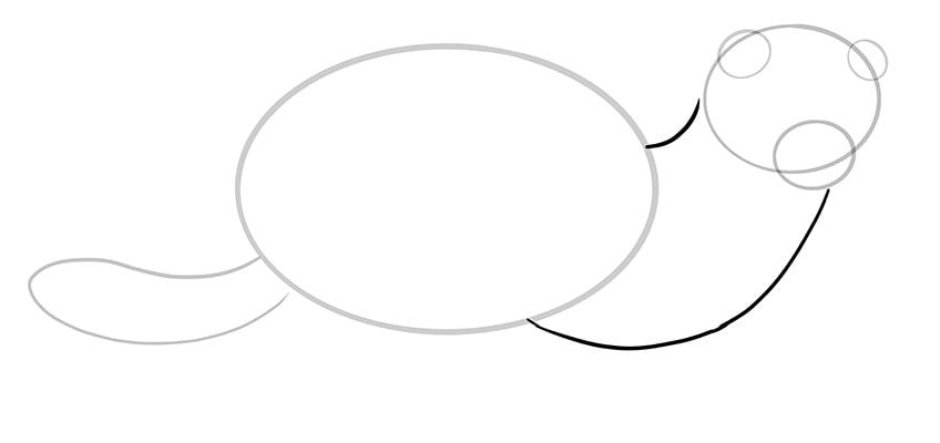 ferret drawing 6
