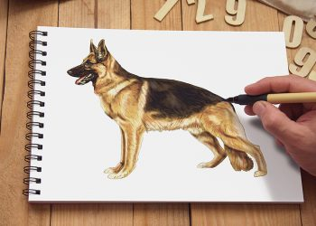 how to draw a german shepherd 2