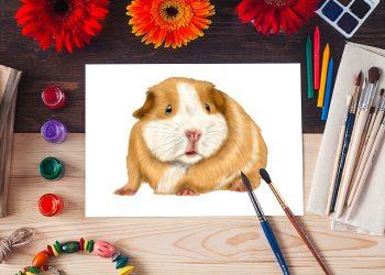 how to draw a guinea pig 2