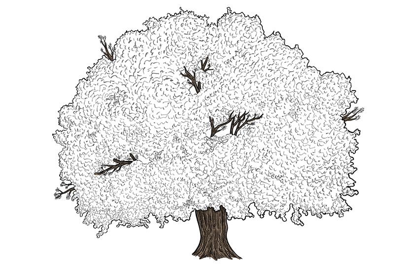 tree drawing 11